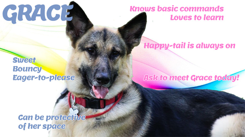 Grace is MAGSR's Dog of the Month!