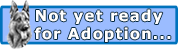 I'm not quite ready for adoption yet but check back soon!