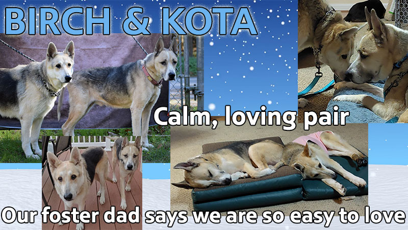 Birch & Kota are MAGSR's Dogs of the Month!