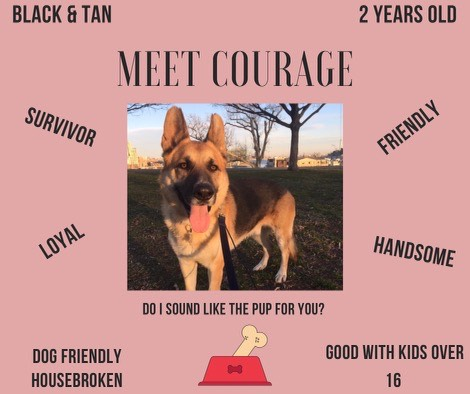 Meet our Dog of the Month, Courage.