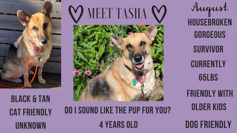 Tasha is MAGSR's Dog of the Month!