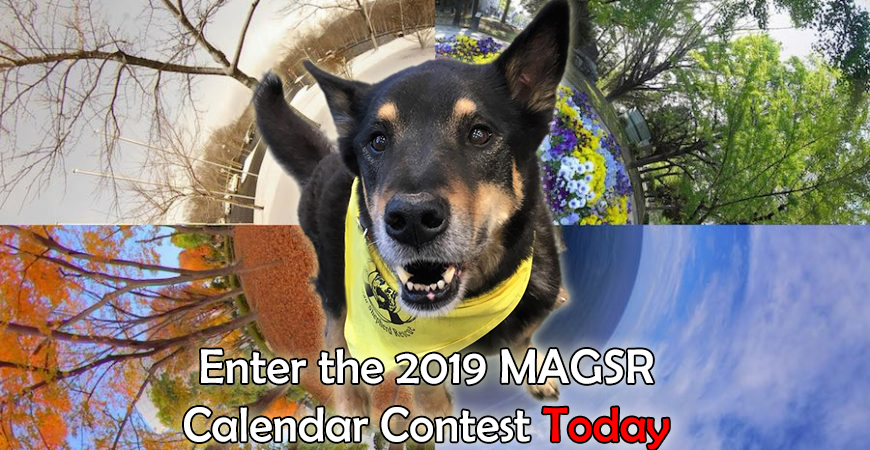Order your 2018 MAGSR Calendars today!