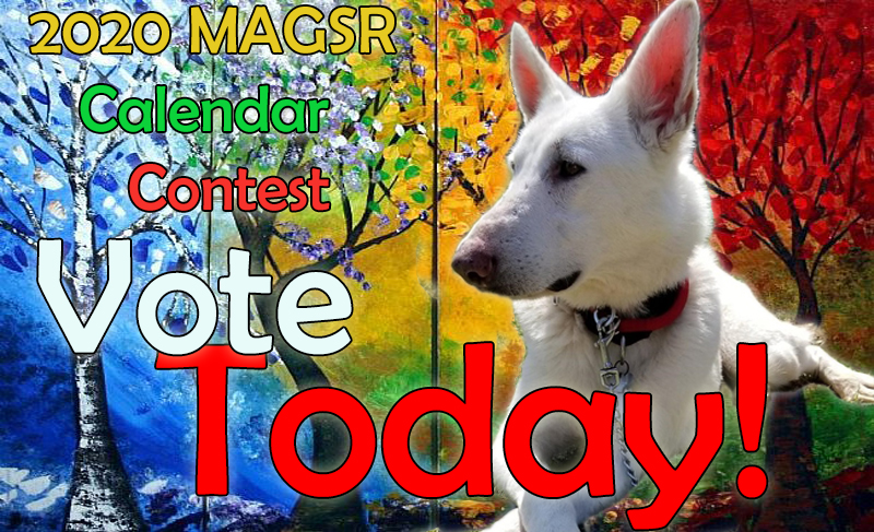 MAGSR ORG | Providing Rescue and Adoption Services in MD, DC