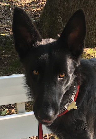 Shadow needs your help to beat heartworm