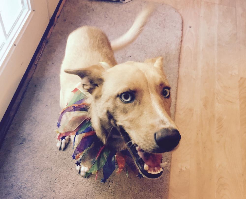 Dog Adoption Md Dc Va
