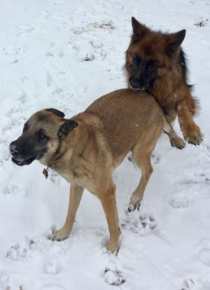 Maxi & Geiger having fun in the snow!