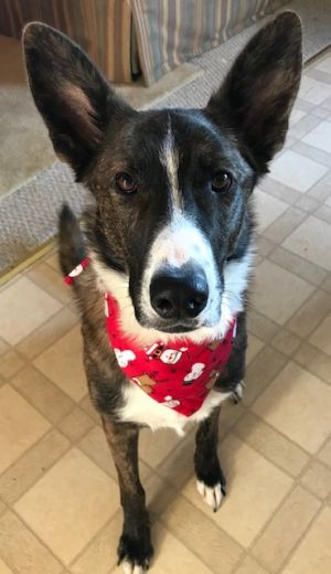 Merle at Christmas 2018