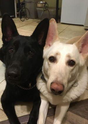 Loki (L) & Nikko (R)