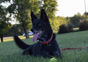 Bella loves playing ball
