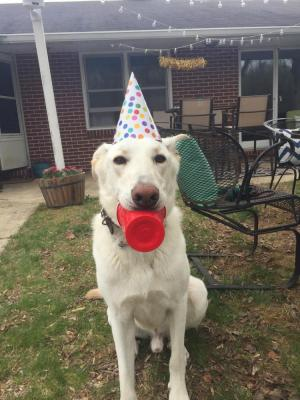 Bo loves attending doggie birthday parties