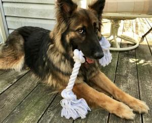 I love my toy