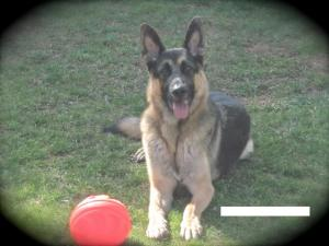 Kaiser with his favorite ball