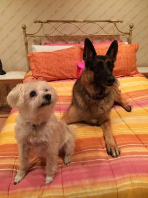 Kaiser and his buddy Bailey