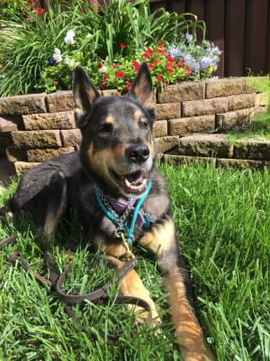 Kenya the Mellow is waiting for her forever family to find her.