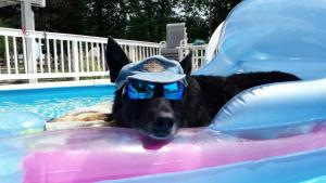 Laci loves relaxing in the pool