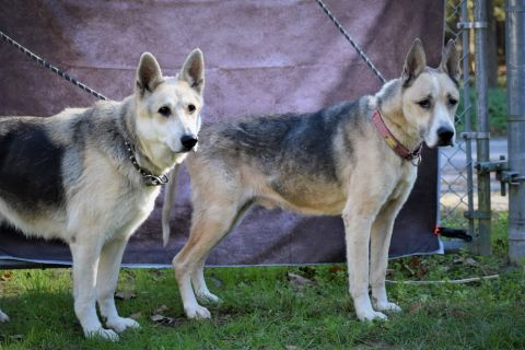 Bonded pair Birch & Dakota