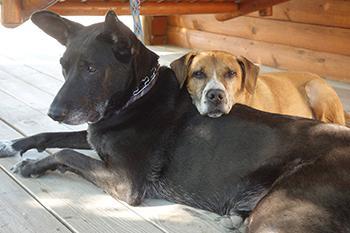Bella & Chief