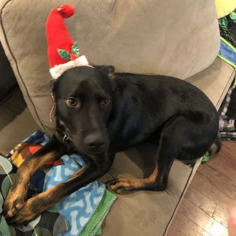 Socks (fka Noah) gets festive!
