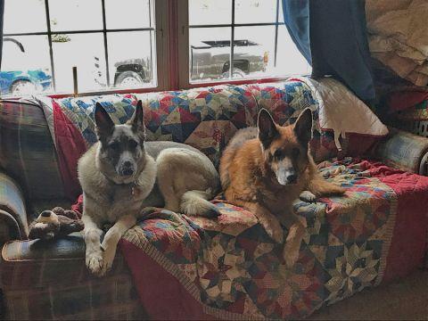 Sadie & friend