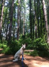 Leona enjoys a moment of nature in Patuxent River State Park