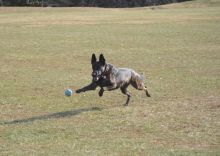 MAGSR Alum Elke, loves to be active, play fetch, swim and go on hikes.  She's also a total mamma's girl.