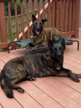 Elke and her brother Caesar posing for a pic.