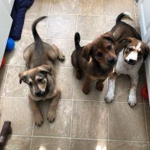 "Orion, Anissa, and Kiernan say, ""Mommmm, where's dinner?"""