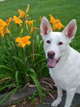 Riana posing in front of the Daylillies