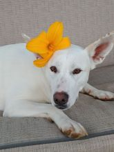 Riana with a lily behind her right ear, means she is looking for a boyfriend ;)